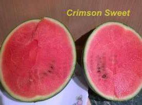 Arbūzi Crimson Sweet 1g