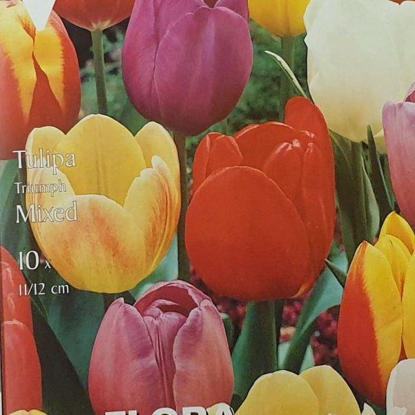 Tulpes triumfa MIX 10 gab