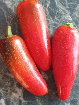 Pipari asie JALAPENO RUBEN čilli 0.5g
