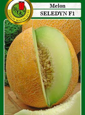 Melones Seledyn F1 1g
