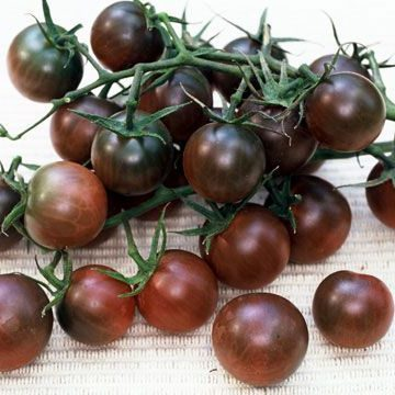 Tomāti Black Cherry 0.3g