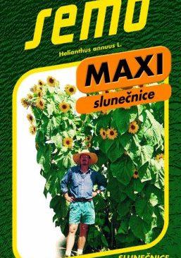 Saulespuķes MAXI Kong F1 1g