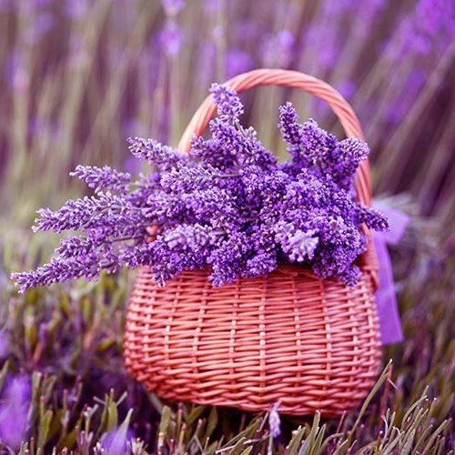 Lavanda Provence 0.4g