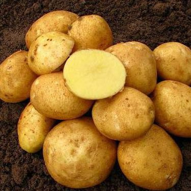 Kartupeļi Vineta 1kg