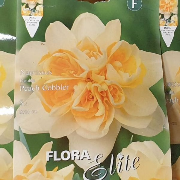 Narcises pildītas Peach Cobbler 5gb